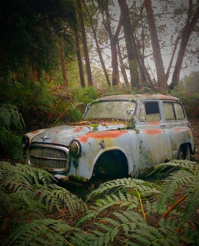 Abandon car in the forest