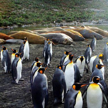 Antarctic social scene!