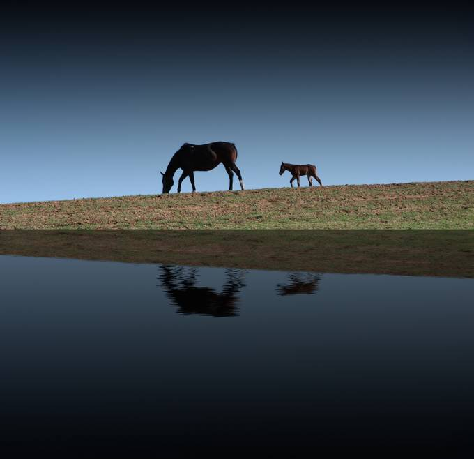 horse reflection by erikquimby - Lakes And Reflections Photo Contest