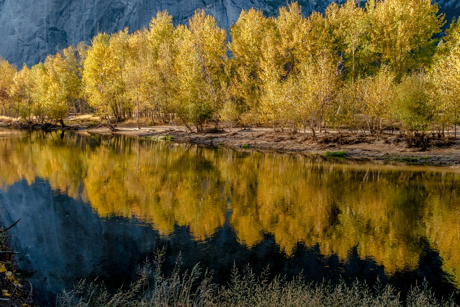 Taken during a walk along the Merced river in Yosemite National Park.