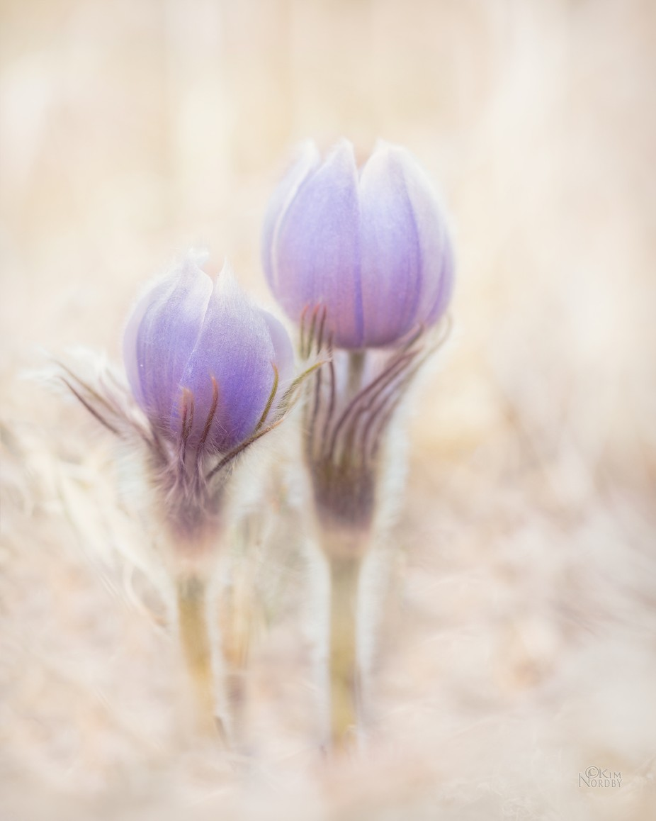 Signs of Spring by KimNordbyPhotography - Pastel Colors Photo Contest
