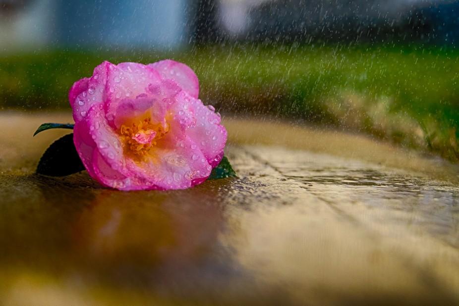 left in the rain
