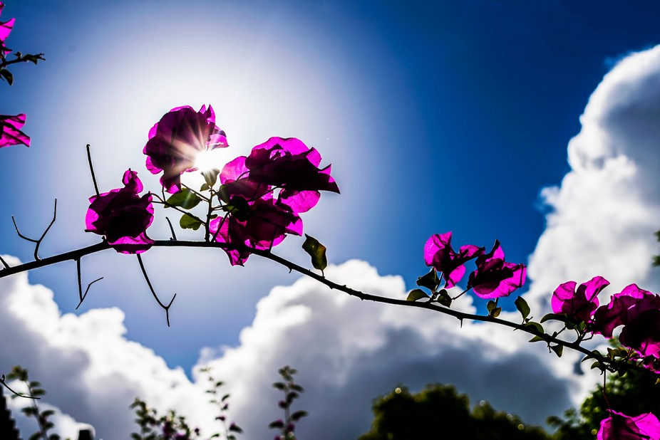 Nice warm summers day in South Africa. Calm breeze blowing and the suns rays showing the beautifu...