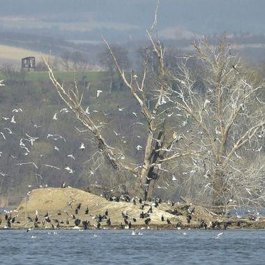 Reservoir Nove Mlyny. Birds island