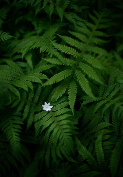 The Fern Flower