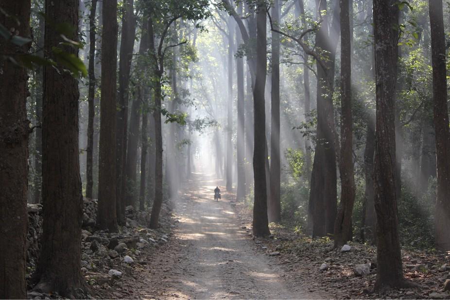 Jungle, light, morning, daylight, nature