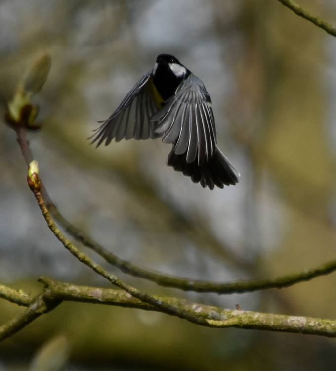 Taken in Crane Park West London