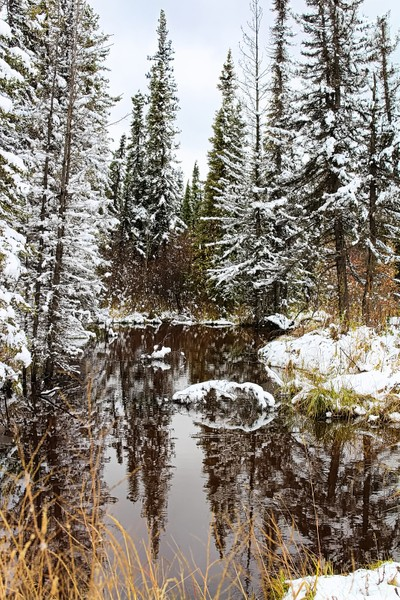 First snowfall in an Alberta Forest