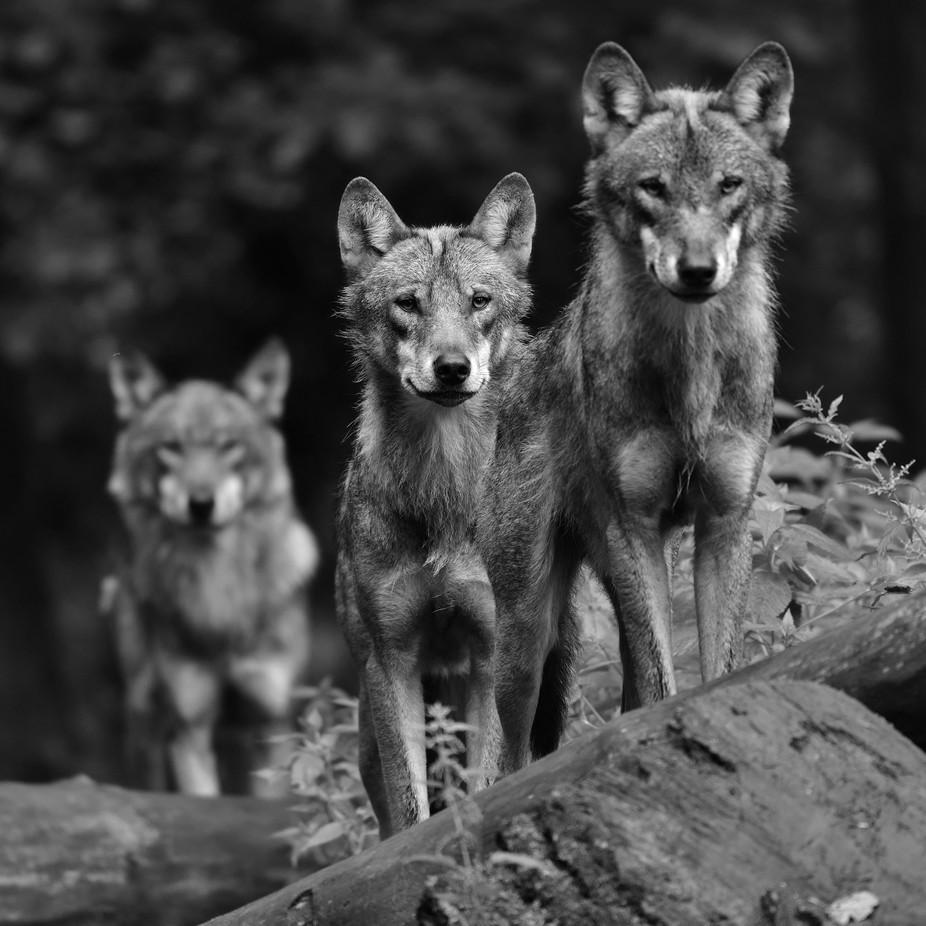 Triplet. by henkvanderlinden - Image Of The Month Photo Contest Vol 32