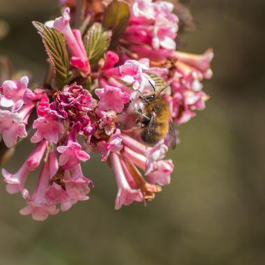 Bee-8244