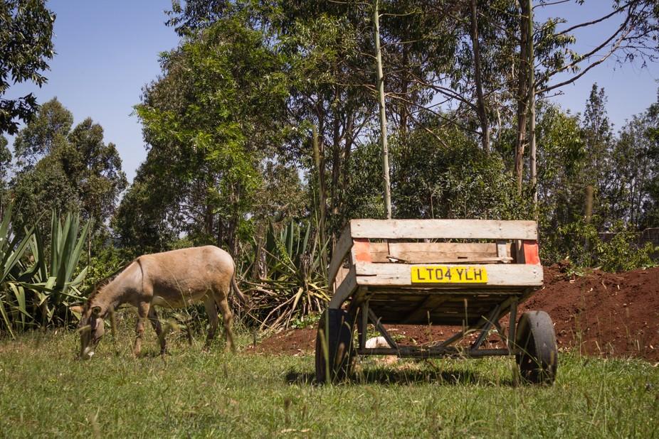 """Registered"" donkey cart"