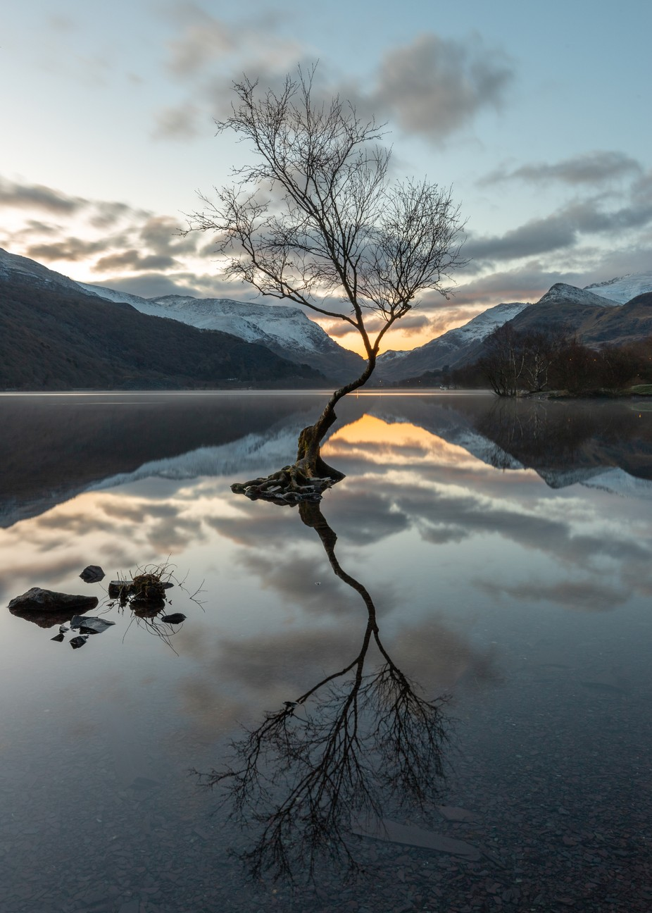 Lonely Tree At Dawn by jaybirmingham - Stillness Photo Contest