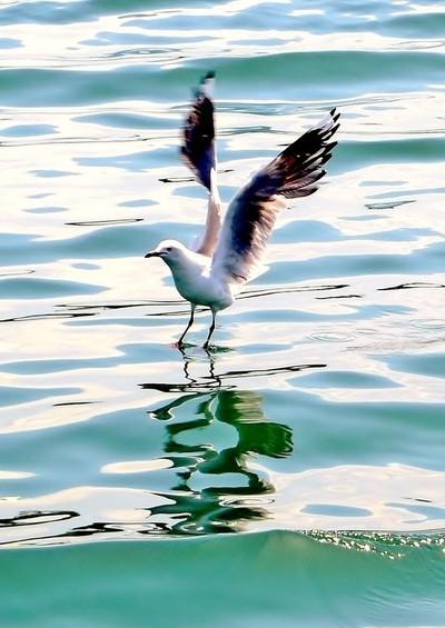 Walking on Water !!,,,,,,020