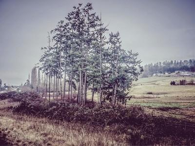 Something I snapped out the car window, while leaving Sequim, WA . . . #fujifilmx30#fujifilm#fujifilm_xseries#fujilove#fujifilmstreet #sequim#sequimwa#washingtonstate#landscapephotography#trees#fromamovingvehicle#moody#nostalgia#greenwinter