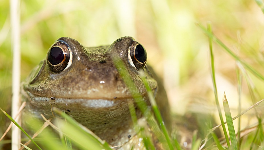 found this frog in my garden and it was a very good model