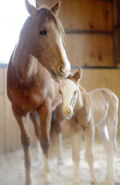 Mother Mare I