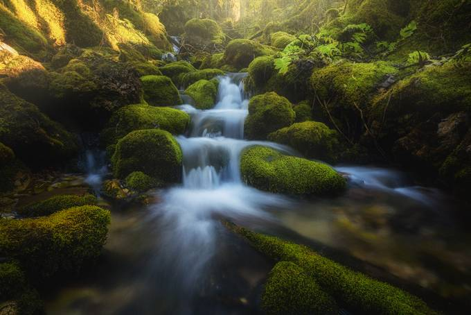 Enchanted Stream by albertdros - Streams In Nature Photo Contest