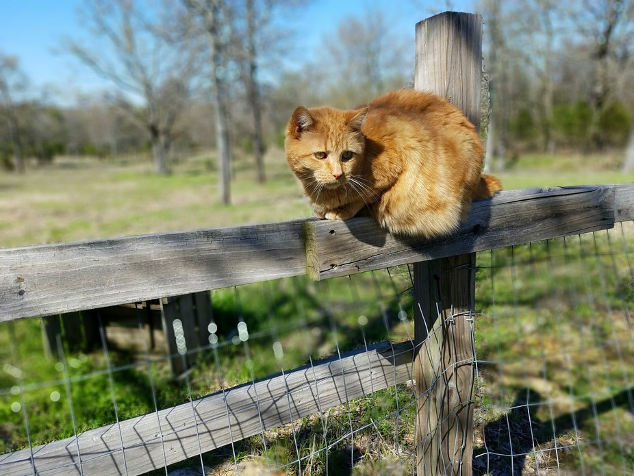 Molly on the Fence