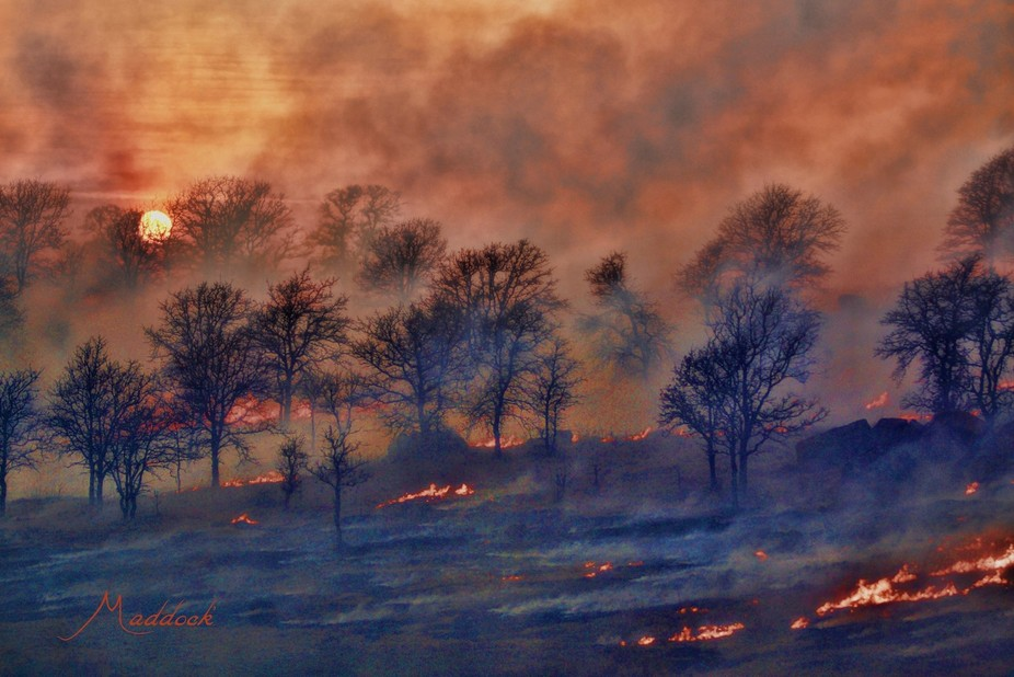Osage Range fire hits the tree line.