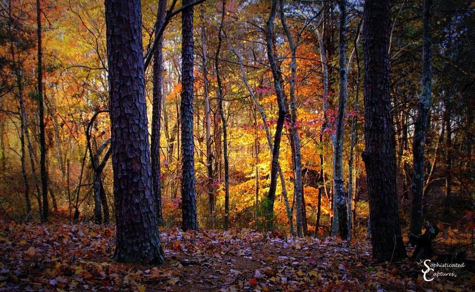 NC Fall Foliage