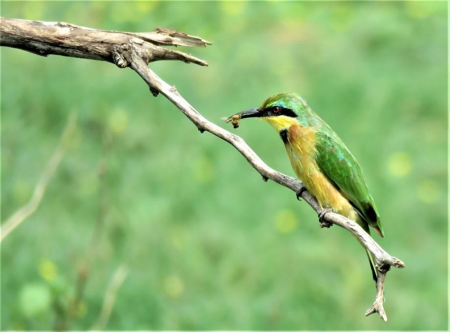 Taken at Madikwe Game Reserve