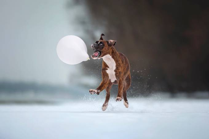 Attack on the balloon  by tamasszarka - We Love The Winter Photo Contest