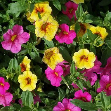 Every garden needs color.