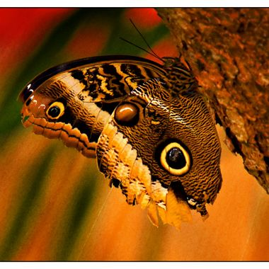 Butterfly resting on a tree.