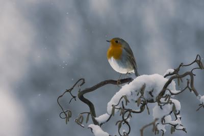 Soft Robin
