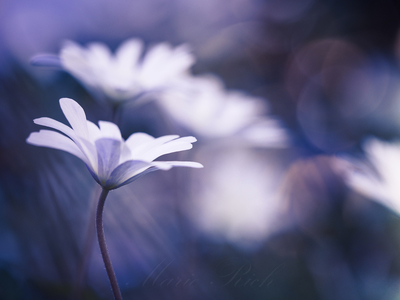 ** Dancing Flowers **