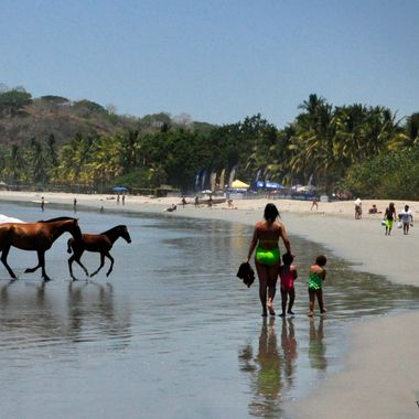 These horses are running to lay in the sand beneath the coconut trees.  They know where they live and go home at night.  Dusk finds all horses within their fences and the gates are not closed.