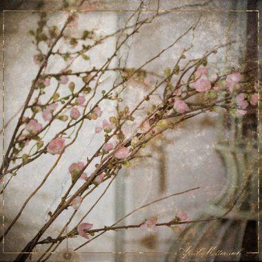 Cherry Blossom art w logo
