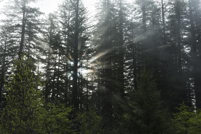Sun Vs Fog