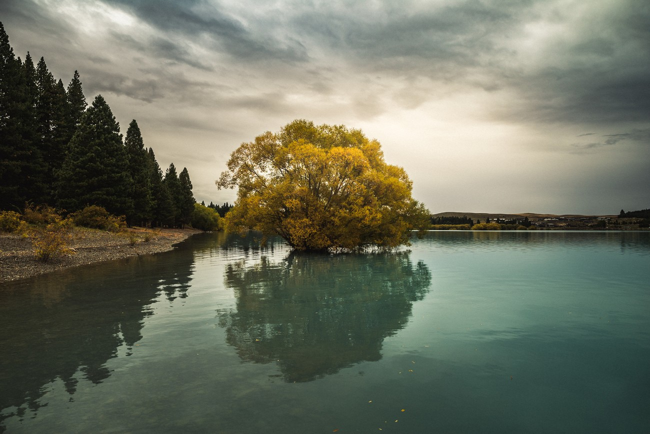 Could the Tekapo tree be as famous as the Wanaka tree ? Every New Zealand lake seems to have a special tree.