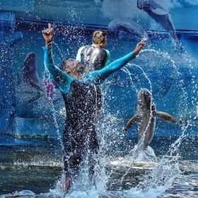 Pattaya Dolphin World, Dolphin ???? . Feast for the eyes.