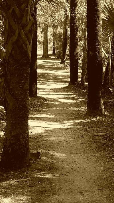 shadows on the hiking trail