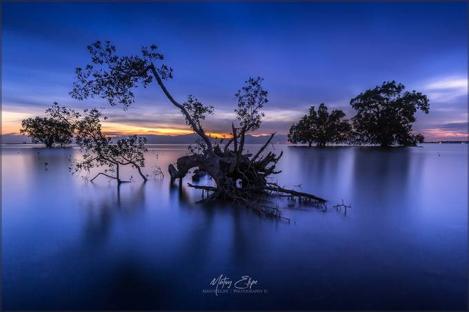 Mangroves by matoy - Image Of The Month Photo Contest Vol 32