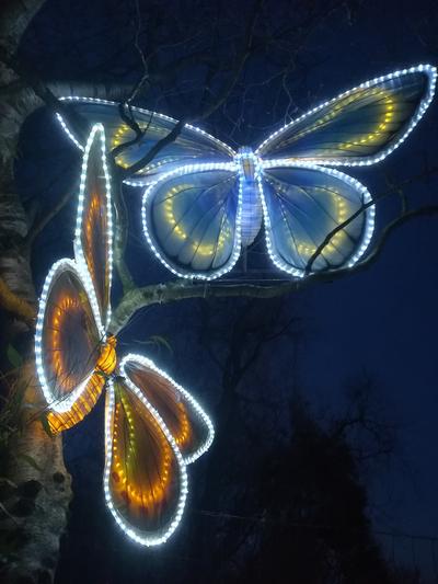12 Giant butterfly lanterns Edinburgh Zoo Edinburgh Scotland UK