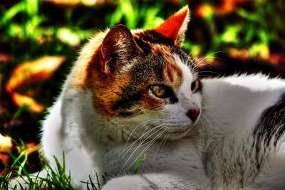 Cat--Gato