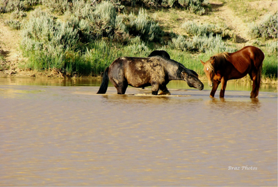 Ruckus At The Watering Hole