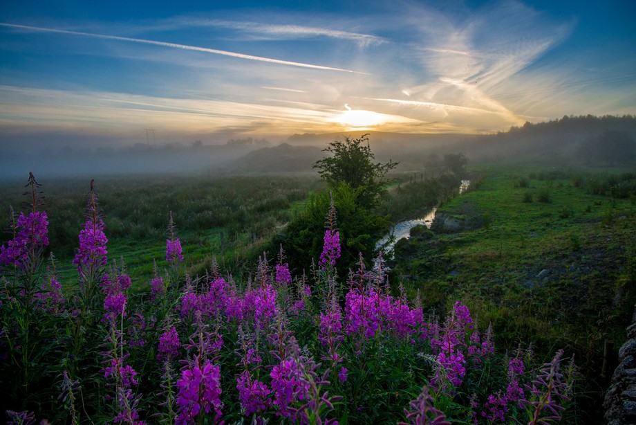Orchid Sunrise
