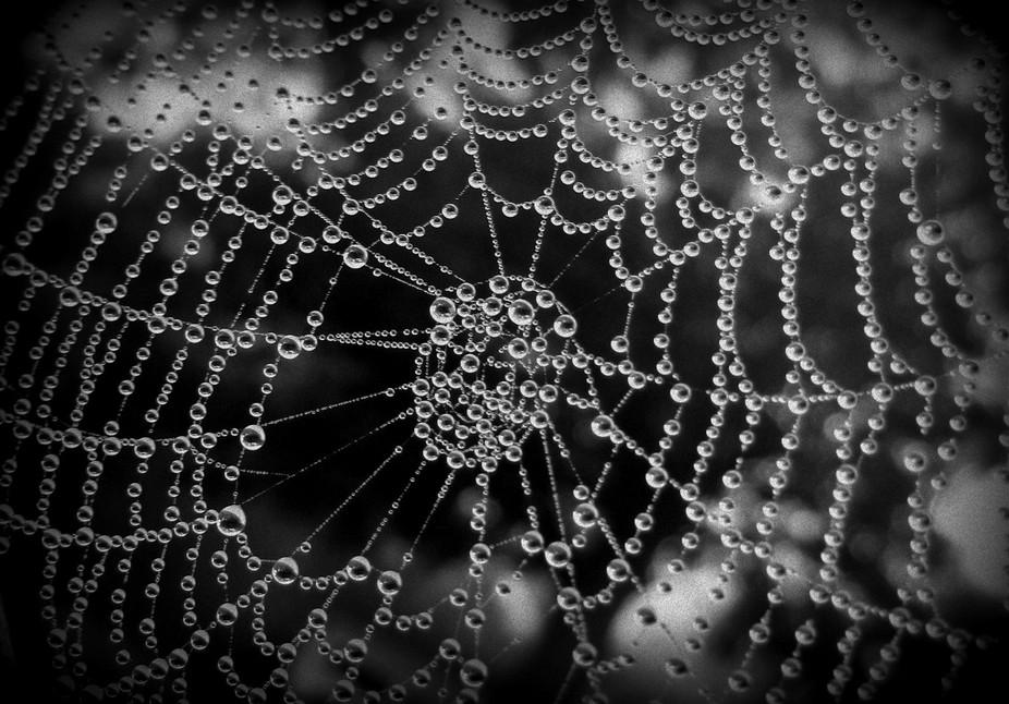 beaded web