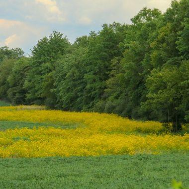 Field, Potomac, MD - IMG_4015-2