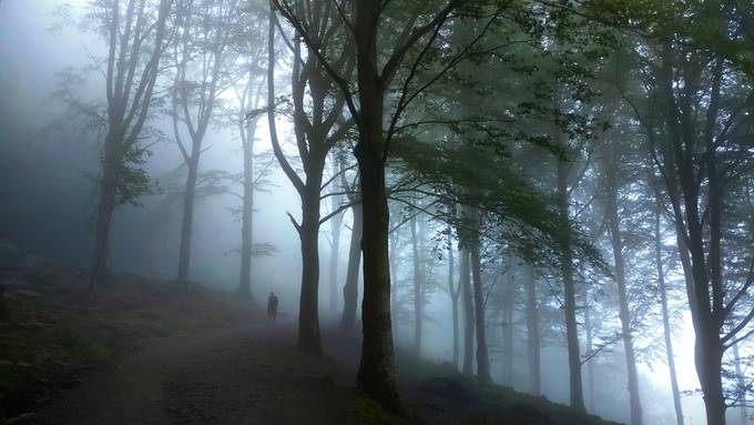 tree2 by laurentwach - Tall Trees Photo Contest