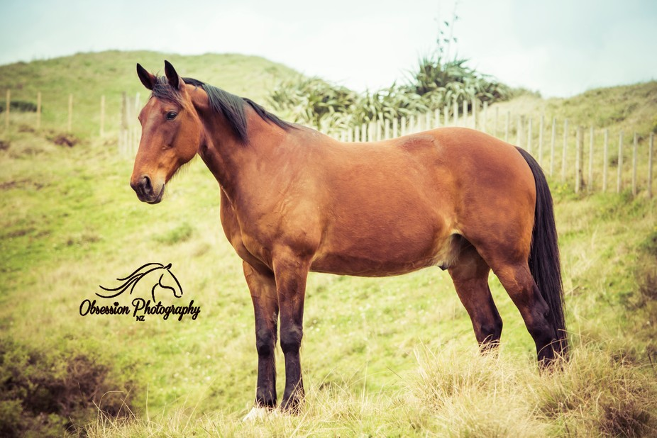 This is my Standardbred gelding, Whiskey.  He is personality plus... :D