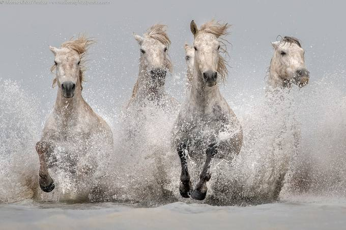 Camargue's emotions by albertoghizzipanizza - Covers Photo Contest Vol 46