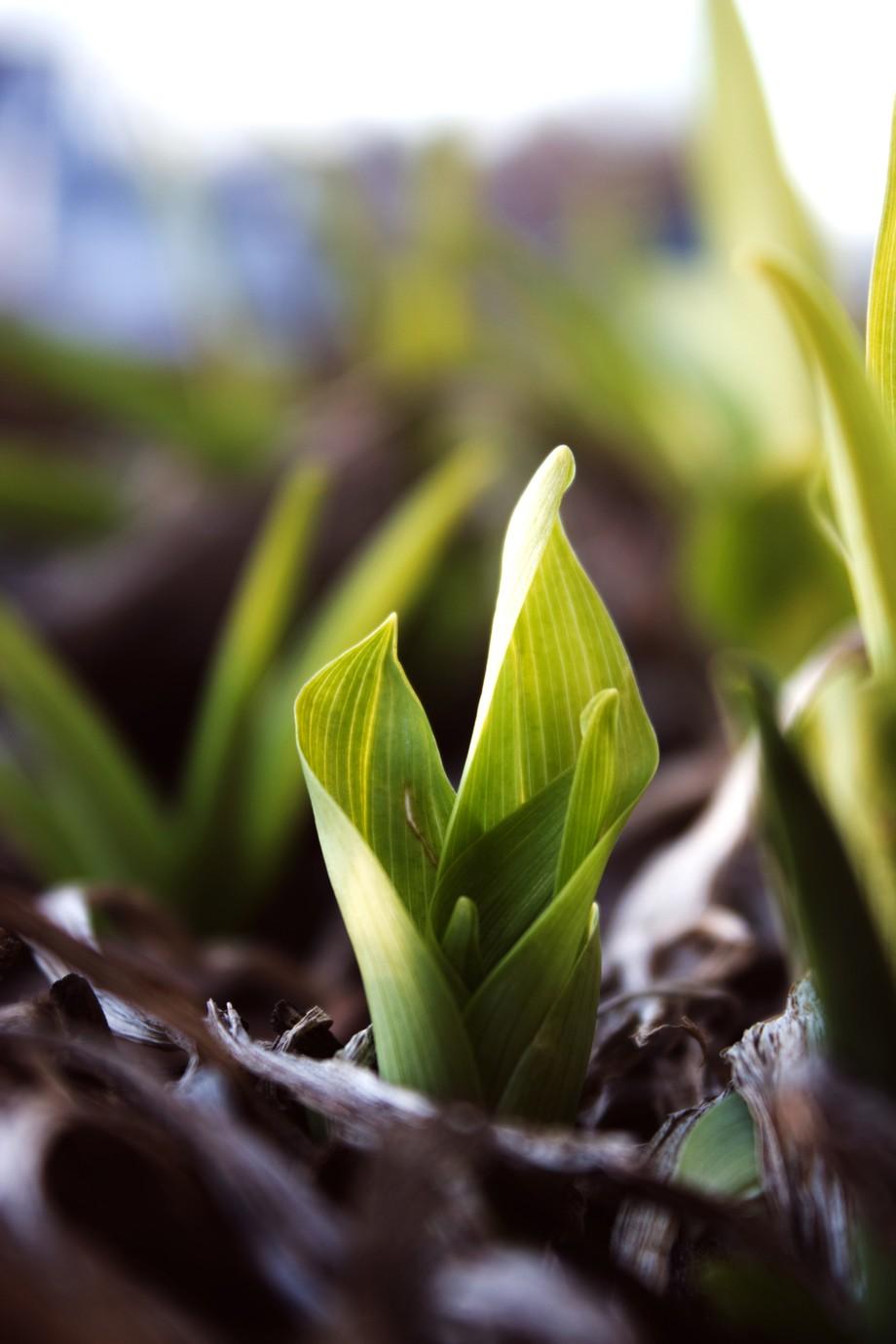 Green in spring