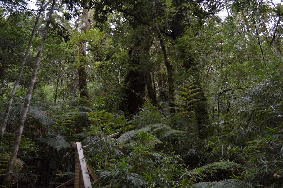 Bosque Valdivia