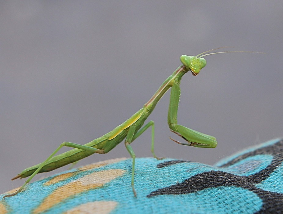 Just setting on my back patio and this little guy walked past me...photo time! Not even 2 inches ...