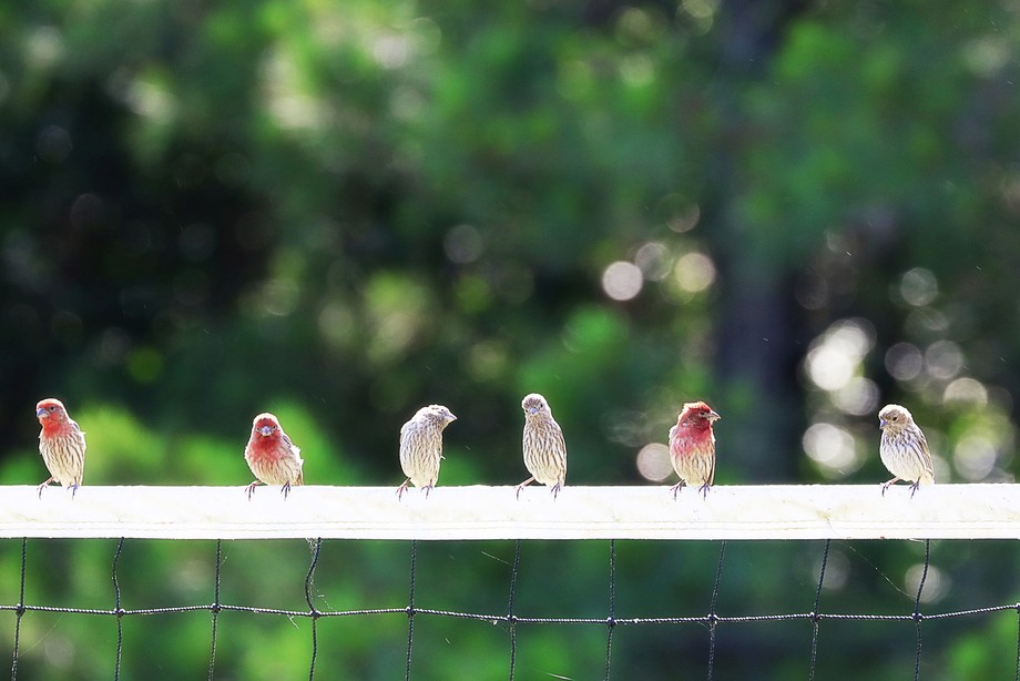 Birds hanging out on the volleyball net